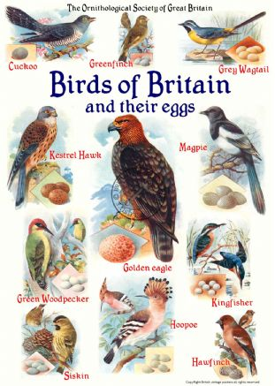 Birds of Britain & their eggs